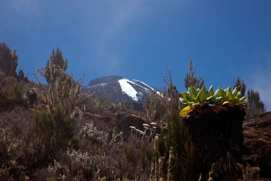 A peek at the top - Climbing Kilimanjaro