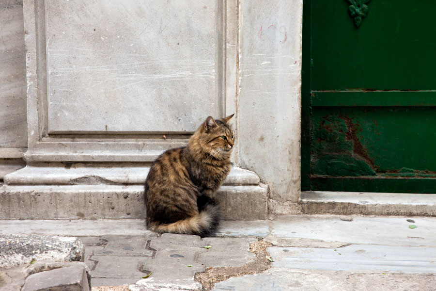 Gatekeeper - Cats in Istanbul I